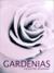Gardenias ~ Erotica by Valentine Bonnaire