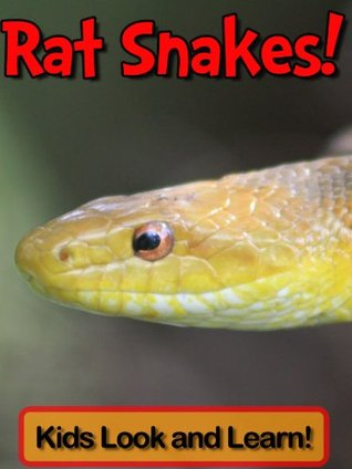 Rat Snakes! Learn About Rat Snakes and Enjoy Colorful Pictures - Look and Learn! (50+ Photos of Rat Snakes)