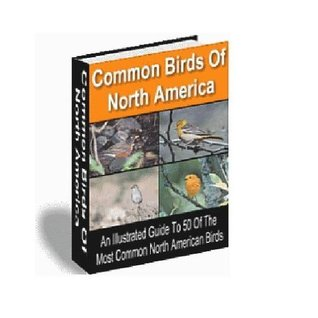 Common Birds of North America