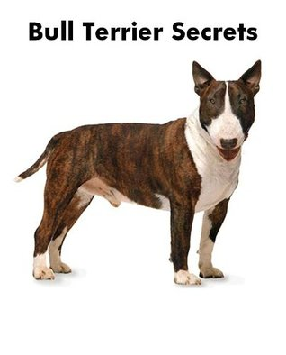 bull-terrier-secrets-how-to-raise-happy-and-healthy-bull-terriers