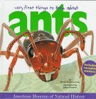 Very First Things to Know About Ants