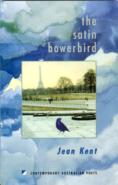 The Satin Bowerbird