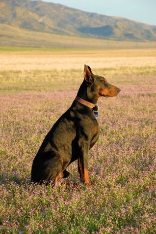 Dobermans from my point of view