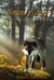 Timber's Gambit: Nature's Guardians Series: Book Two