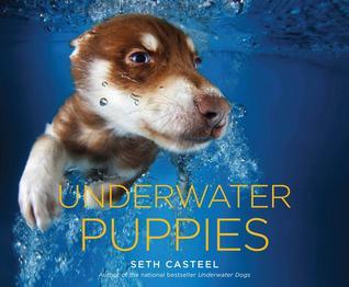 underwater-puppies