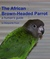 African Brown-Headed Parrot...