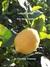 Lemon Drops: the soul candy