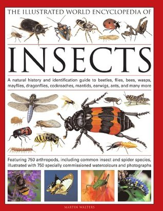 The Illustrated World Encyclopedia of Insects: A Natural History and Identification Guide to Beetles, Flies, Bees, Wasps, Springtails, Mayflies, Stoneflies, Dragonflies, Damselflies, Cockroaches, Mantes, Earwigs, Stick and Leaf Insects, Bristletails, D...