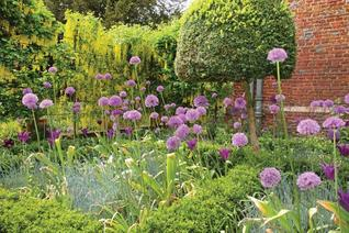 Royal Horticultural Society Companion to Scented Plants