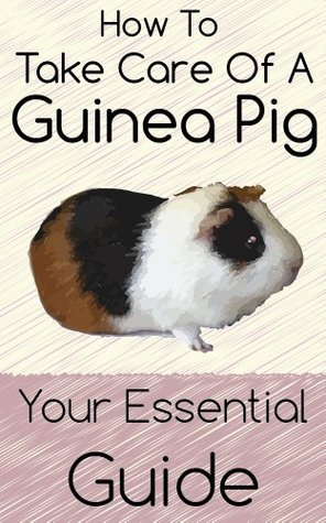 How to Take Care of A Guinea Pig: Your Essential Guide