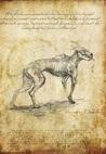 El sabueso by H.P. Lovecraft