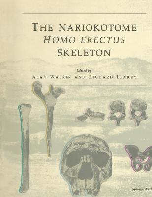 The Nariokotome Homo Erectus Skeleton