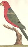 Speke Parrot