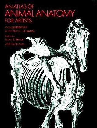 An Atlas Of Animal Anatomy For Artists By Wilhelm Ellenberger