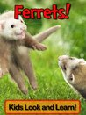 Ferrets Learn About Ferrets and Enjoy Colorful Pictures - Look