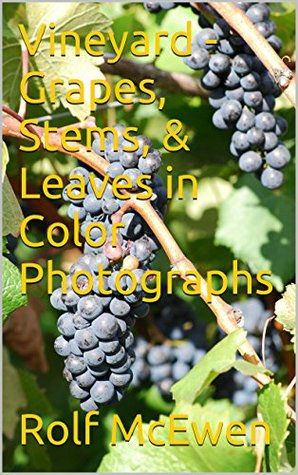 Vineyard - Grapes, Stems, & Leaves in Color Photographs