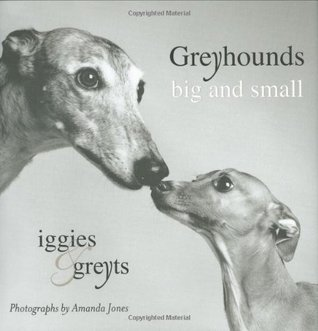 greyhounds-big-and-small-iggies-and-greyts