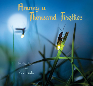 Among a Thousand Fireflies