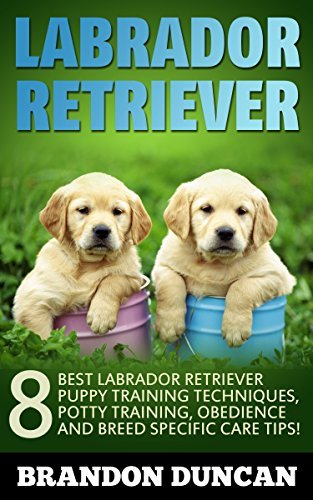 Labrador Retriever: 8 Best Labrador Retriever Puppy Training Techniques, Potty Training, Obedience and Breed Specific Care Tips!