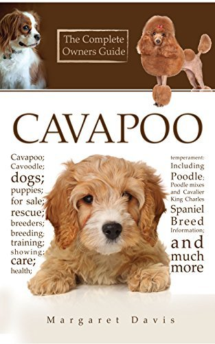 Cavapoo; Cavoodle; dogs; puppies; for sale; rescue; breeders; breeding; training; showing; care; health; temperament: Including Poodle; Poodle mixes and Cavalier King Charles Spaniel