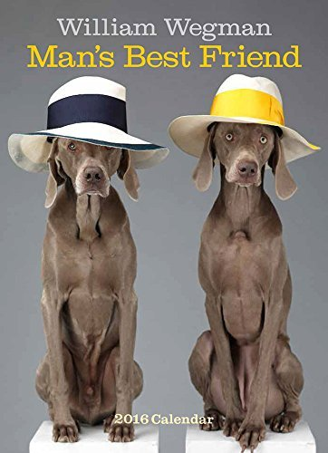 William Wegman Man's Best Friend 2016 Wall Calendar