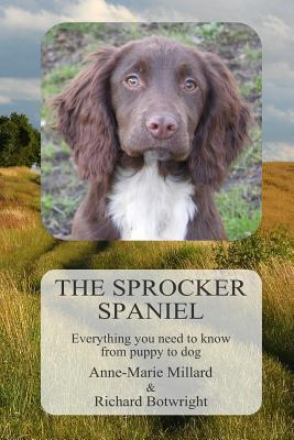 The Sprocker Spaniel: Everything You Need to Know from Puppy to Dog