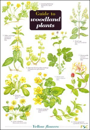 Guide to Woodland Plants