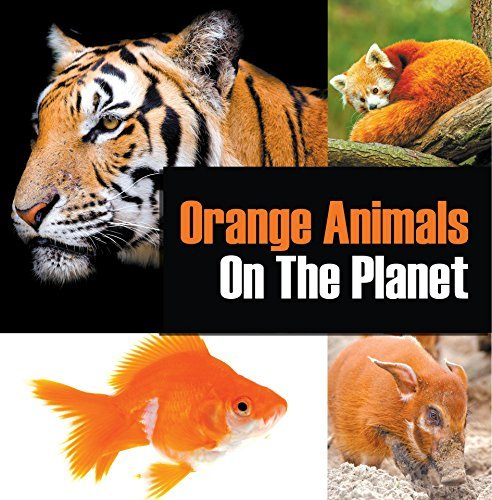 Orange Animals On The Planet: Animal Encyclopedia for Kids (Colorful Animals on the Planet Book 3)