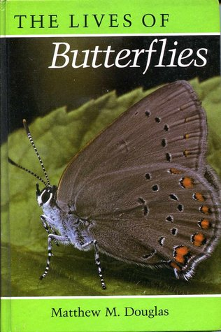 inside the lives of butterfly traders - 316×475