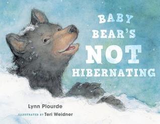Baby Bears Not Hibernating