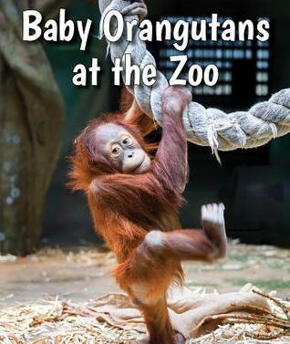 Baby Orangutans at the Zoo