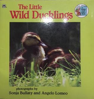 The Little Wild Ducklings