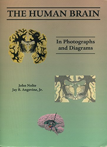 Human Brain: In Photographs And Diagrams
