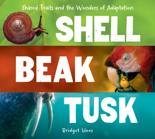 Shell, Beak, Tusk by Bridget Heos