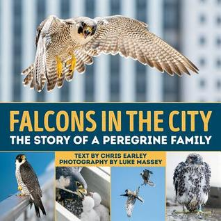 Falcons in the City by Chris Earley