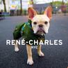 Rene-Charles: NYC: Little Bulldog in the Big City