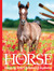 Foals: Horse Images for Art...