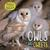 Owls and Owlets (Animals and their Babies)
