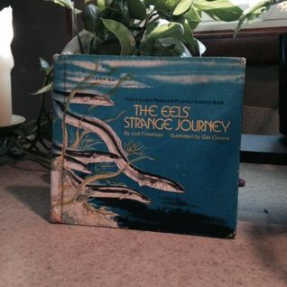 The Eels' Strange Journey by Judi Friedman