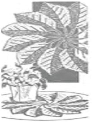 #0418 CROCHET DOILIES VINTAGE CROCHET PATTERN
