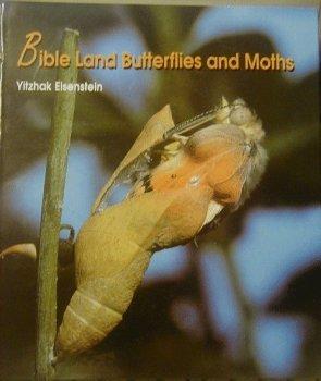Bible Land Butterflies and Moths
