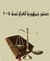 الدستور العراقي