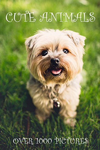 Cute Animals: 1000+ HD Pictures of Cute Fluffy Animals (High Quality Photobook for Kids, Best Pets for Children, Nature & Wildlife Pictures, Baby Kittens Puppies & More)