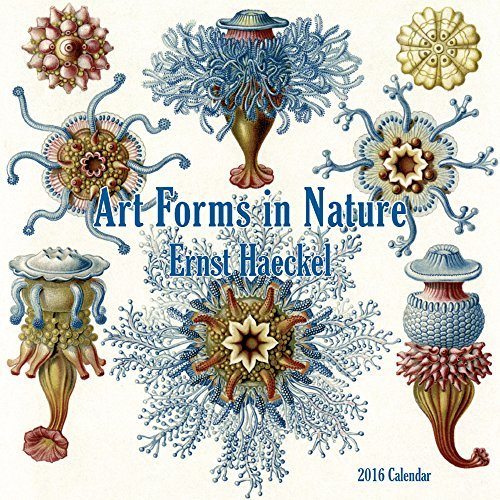 Ernst Haeckel-Art Forms in Nature (CL53160)