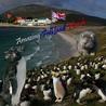 Amazing Falkland Islands
