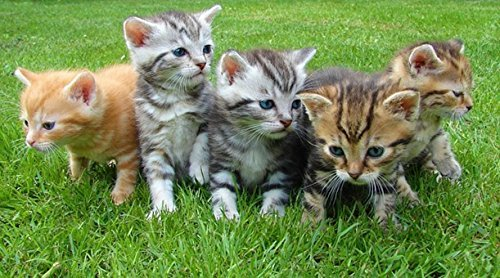 Photo Book Animal Cat Cat Cat Cat Cat Cat Cat Cat Cat Cat Cat Cat Cat Cat Cat Cat Cat Cat ...: I Love , I Like Vol.9 Photo 600 +++++