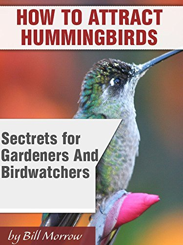 How To Attract Humminbirds To Your Yard Or Garden: Secrets For Gardeners & Birdwatchers