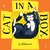 Cat in a box by Jo Williamson