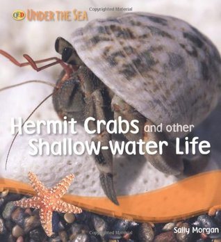 Hermit Crabs and Other Shallow Water Life