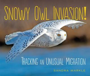 Snowy Owl Invasion! by Sandra Markle